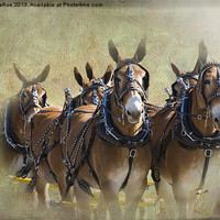 Buy canvas prints of Old West Mule Train by Betty LaRue Canvas and Prints