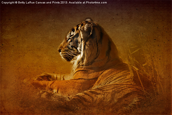 Dont Wake a Sleeping Tiger Canvas print by Betty LaRue Canvas and Prints