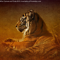 Buy canvas prints of Dont Wake a Sleeping Tiger by Betty LaRue Canvas and Prints
