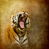 Buy canvas prints of I Am Woman, Hear Me Roar by Betty LaRue Canvas and Prints