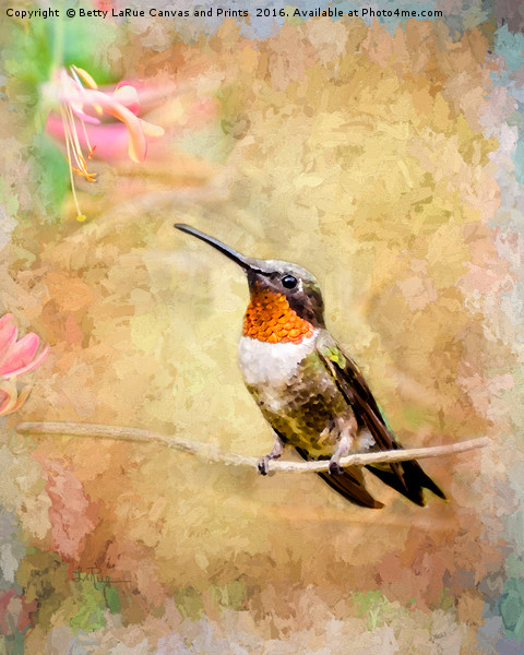 Just Visiting  Canvas print by Betty LaRue Canvas and Prints