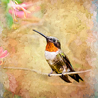 Buy canvas prints of Just Visiting  by Betty LaRue Canvas and Prints