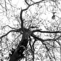 Buy canvas prints of Winter tree by Chiara Cattaruzzi