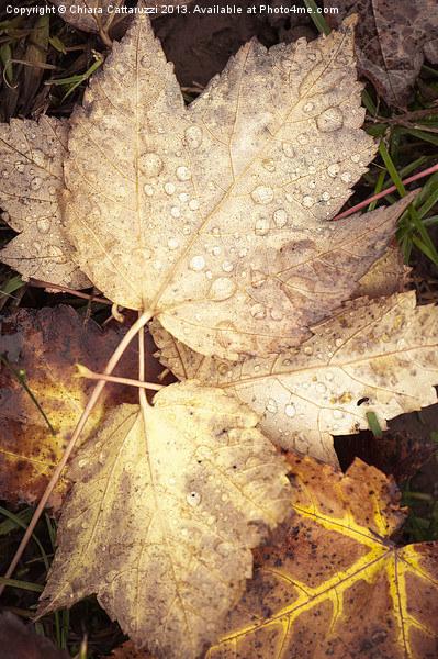 Autumn leaves Canvas Print by Chiara Cattaruzzi
