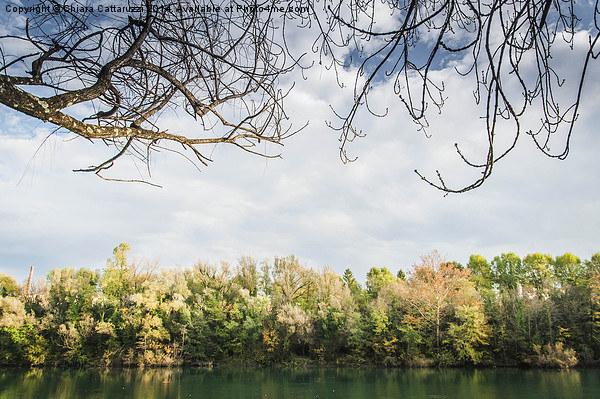Fall trees Framed Mounted Print by Chiara Cattaruzzi