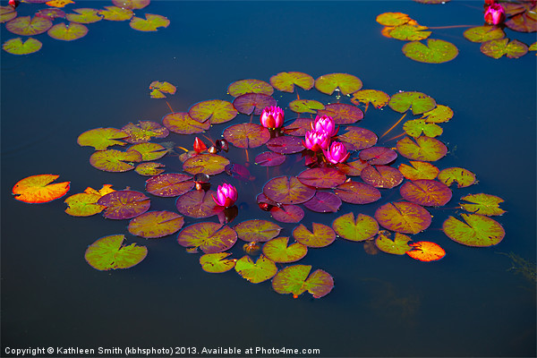 Water lilies Canvas print by Kathleen Smith (kbhsphoto)