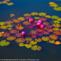 Buy canvas prints of Water lilies by Kathleen Smith (kbhsphoto)