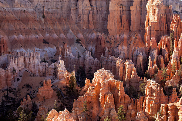 Bryce Canyon Canvas Print by peter schickert