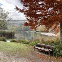Buy canvas prints of Bench by the lake by Rebecca Giles