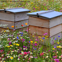 Buy canvas prints of Wild Flower Meadow-Bee Hives by Paula Palmer canvas & prints