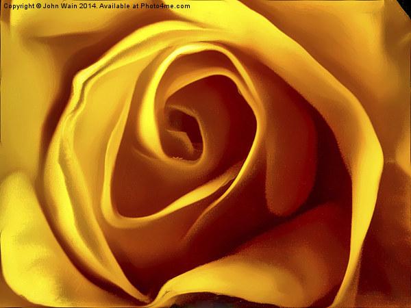 Opening Rose Bud Canvas print by John Wain