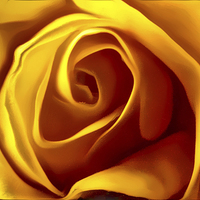 Buy canvas prints of Opening Rose Bud by John Wain
