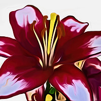 Buy canvas prints of Lily (Digital Art) by John Wain