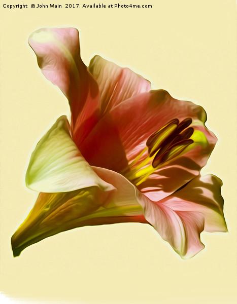 Lily (Abstract Digital Art) Framed Mounted Print by John Wain