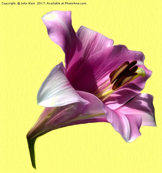 Lily (Abstract Digital Art) Canvas Print by John Wain