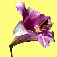 Buy canvas prints of Lily (Abstract Digital Art) by John Wain