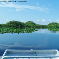 Buy canvas prints of Airboat ride on the Everglades by Roger Wain