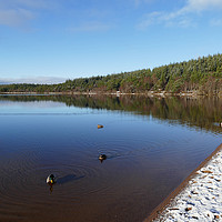 Buy canvas prints of Loch Morlich Winter time by jim scotland fine