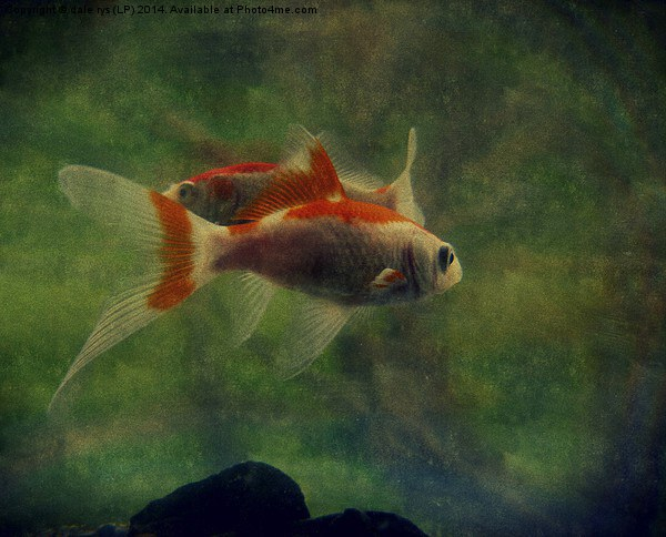 fish life Framed Print by dale rys (LP)