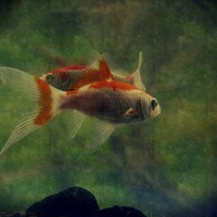 Buy canvas prints of fish life by dale rys (LP)