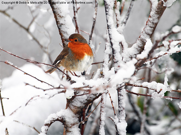 Robin in the snow Canvas print by Debbie Metcalfe