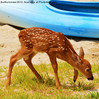 Buy canvas prints of Fawn by Beach Bum Pics