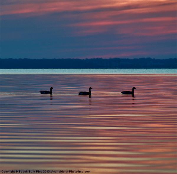 Ducks in a Row Canvas print by Beach Bum Pics