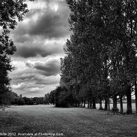 Buy canvas prints of Park by David White
