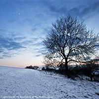 Buy canvas prints of Winter Tree by UK Landscape Canvas by Graham Custance