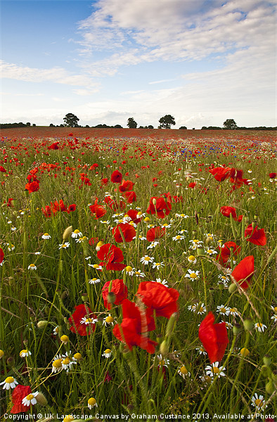 Poppy Field Framed Mounted Print by UK Landscape Canvas by Graham Custance