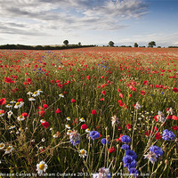 Buy canvas prints of Wild flowers by UK Landscape Canvas by Graham Custance