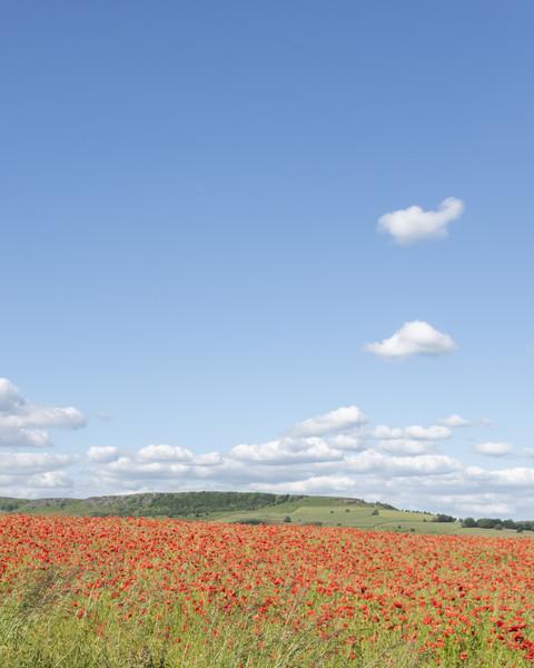 Poppy Field Canvas print by Graham Custance
