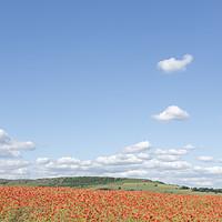 Buy canvas prints of Poppy Field by Graham Custance