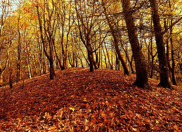 Autumnal Carpet Canvas Print by Darren Whitehead