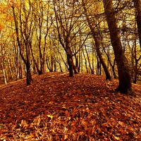 Buy canvas prints of Autumnal Carpet by Darren Whitehead