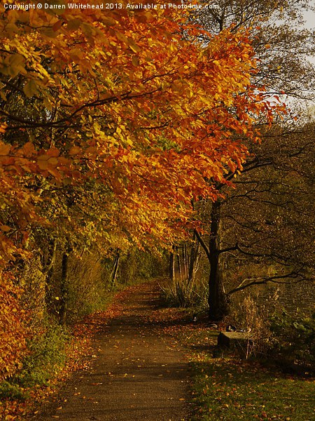 Autumn Walk Canvas Print by Darren Whitehead