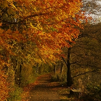 Buy canvas prints of Autumn Walk by Darren Whitehead
