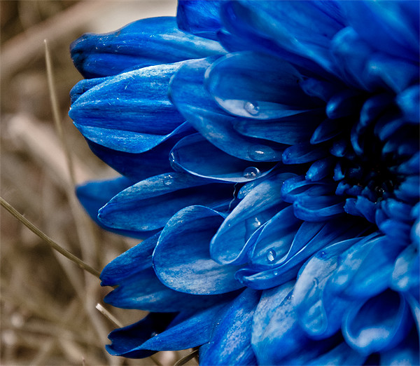blue flower Canvas print by farah ali
