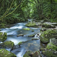 Buy canvas prints of Golitha Falls by Graham Moore