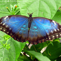 Buy canvas prints of Butterfly at Stratford upon Avon butterfly farm by William Kempster