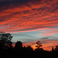 Buy canvas prints of Old Catton, Norwich, Mackerel Sky, Sunset by David Woodcock