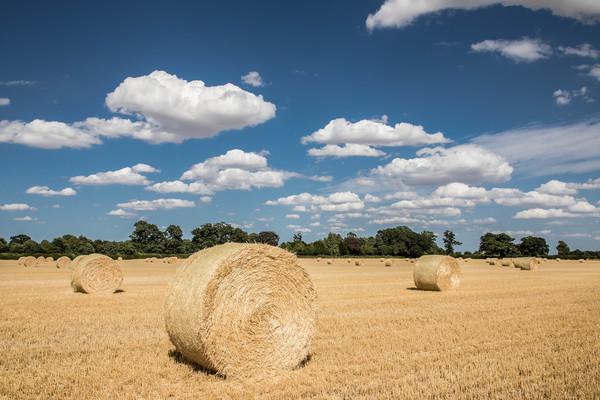 Hay Bales in a Norfolk Field Print by David Woodcock