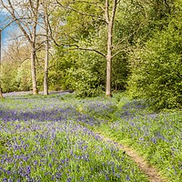 Buy canvas prints of Mossymere Wood, Norfolk by David Woodcock