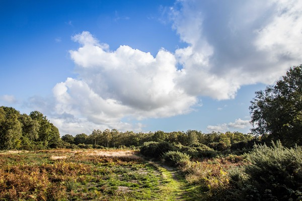 Mousehold Heath, Norwich Canvas print by David Woodcock