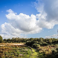 Buy canvas prints of Mousehold Heath, Norwich by David Woodcock