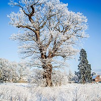 Buy canvas prints of Snow on Catton Park, Old Catton, Norwich by David Woodcock