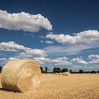 Buy canvas prints of A Field of Straw Bales, Norfolk by David Woodcock