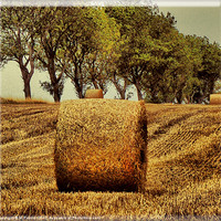 Buy canvas prints of Hay Roll by M Palmer