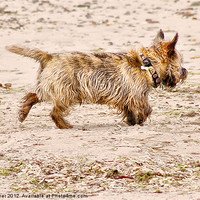 Buy canvas prints of Terrier Trouble by M Palmer