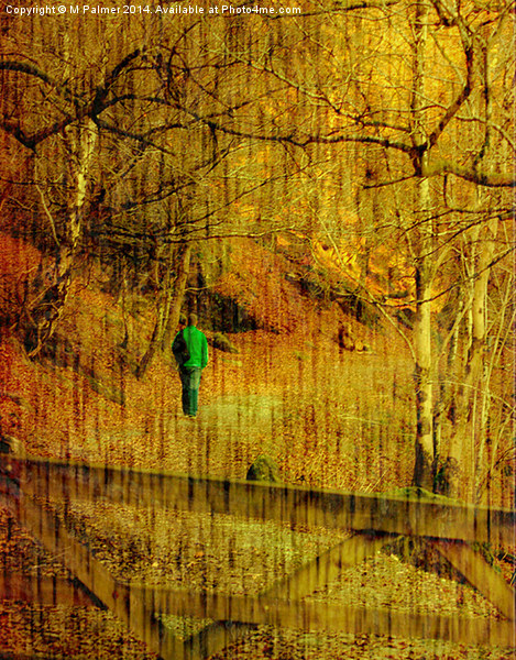 Through The Wood Canvas print by M Palmer